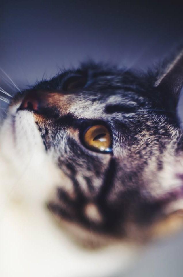gato siera selene los gatos radioficción